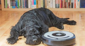 The Best Robot Dogs & Pets Selling Today: The Ultimate