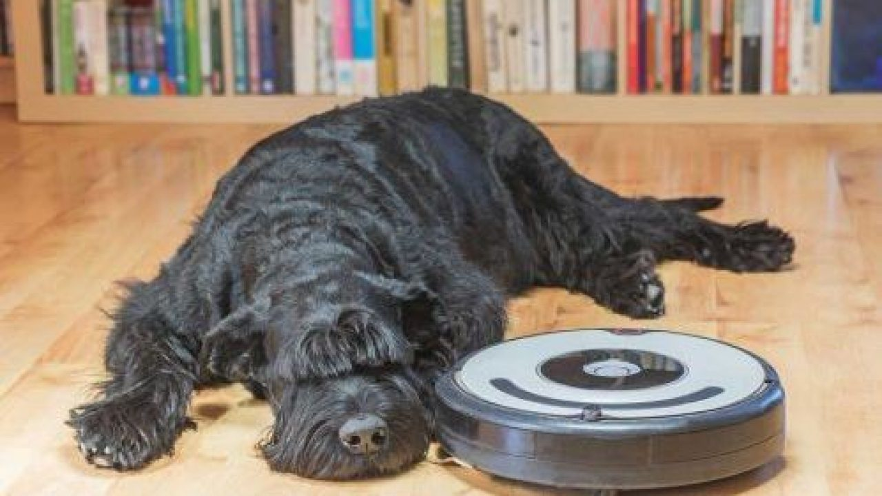 best robot vacuum for pet hair 2019: roomba vs. the rest